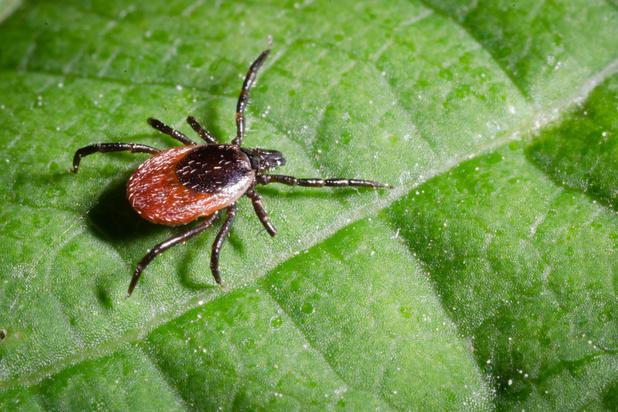 Mogelijk doorbraak in strijd tegen ziekte van Lyme