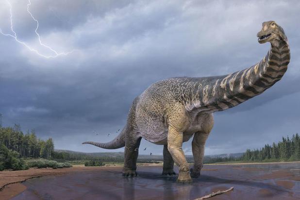 Nieuw ontdekte dinosaurussoort is een van de grootste ooit