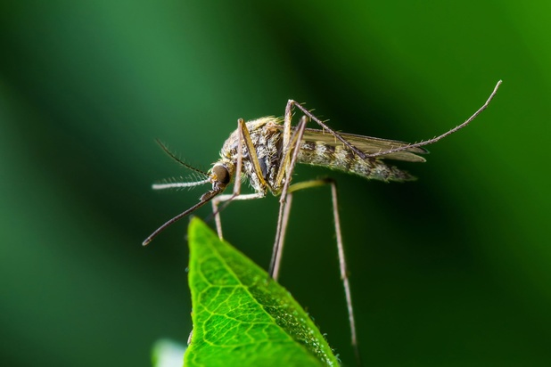 Burundi kampt met opstoot van malaria