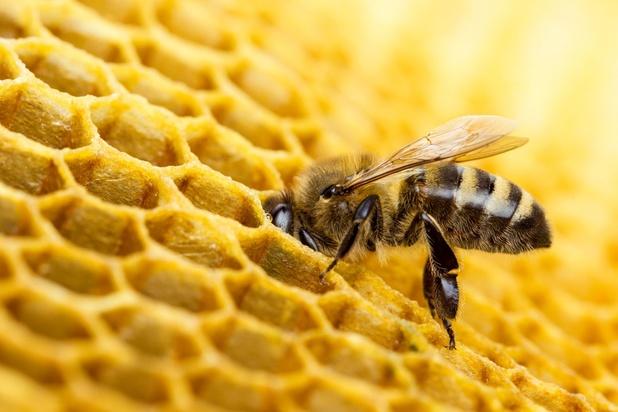 Le printemps maussade printanier provoque une récolte catastrophique de miel