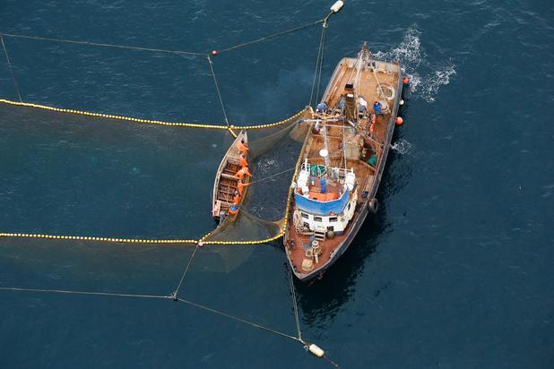 'Overbevissing, fake labels en maffiapraktijken: er hangt een geurtje aan de vis op uw bord'