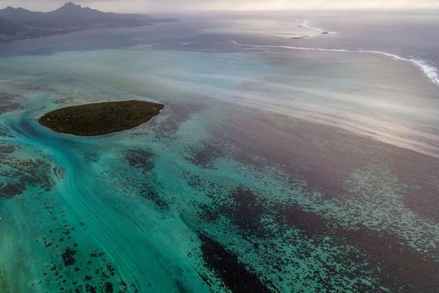 Marée noire à l'île Maurice: des joyaux de biodiversité menacés par la pollution