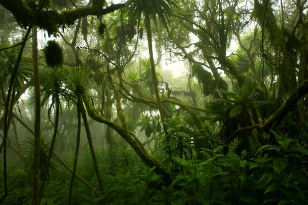 RDC : un plan audacieux pour sauver la deuxième plus grande forêt du monde