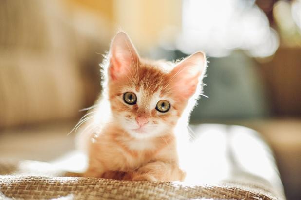 Avez-vous adopté un animal de compagnie pendant la crise ?