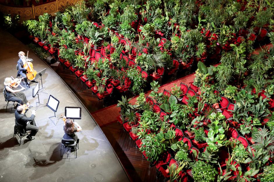 In beeld: 2000 kamerplanten genieten van een concert in de opera