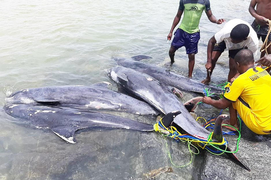 Massasterfte van zeedieren verontrust Ghanezen