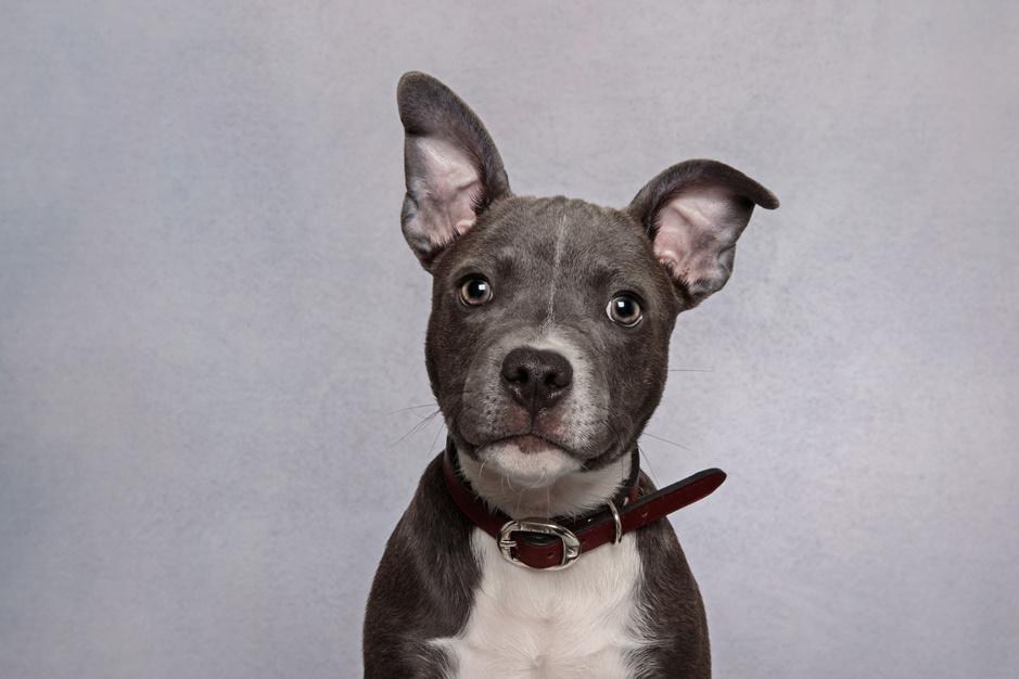 Honden en katten op de autopsietafel: 'Waar dieren klappen krijgen, lopen ook vaak mensen gevaar'