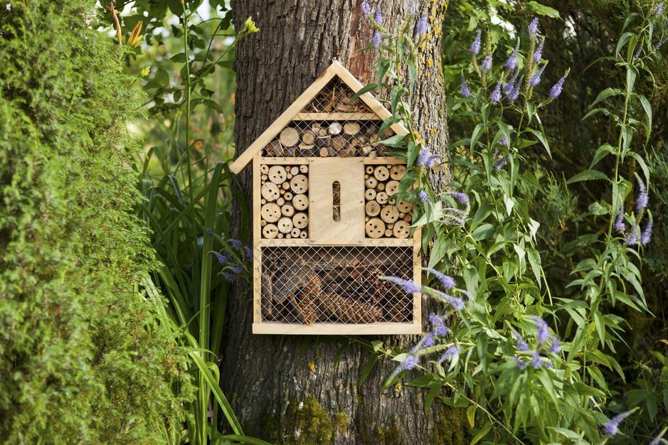 Hoe maak je een vijfsterrenhotel voor wilde bijen in je tuin?