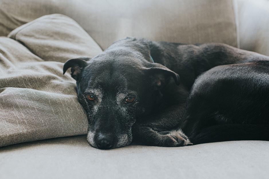 Kiezen voor het leven na euthanasievraag: 'Soms zie je de ogen van mensen oplichten als ze praten over een huisdier of kleinkind'