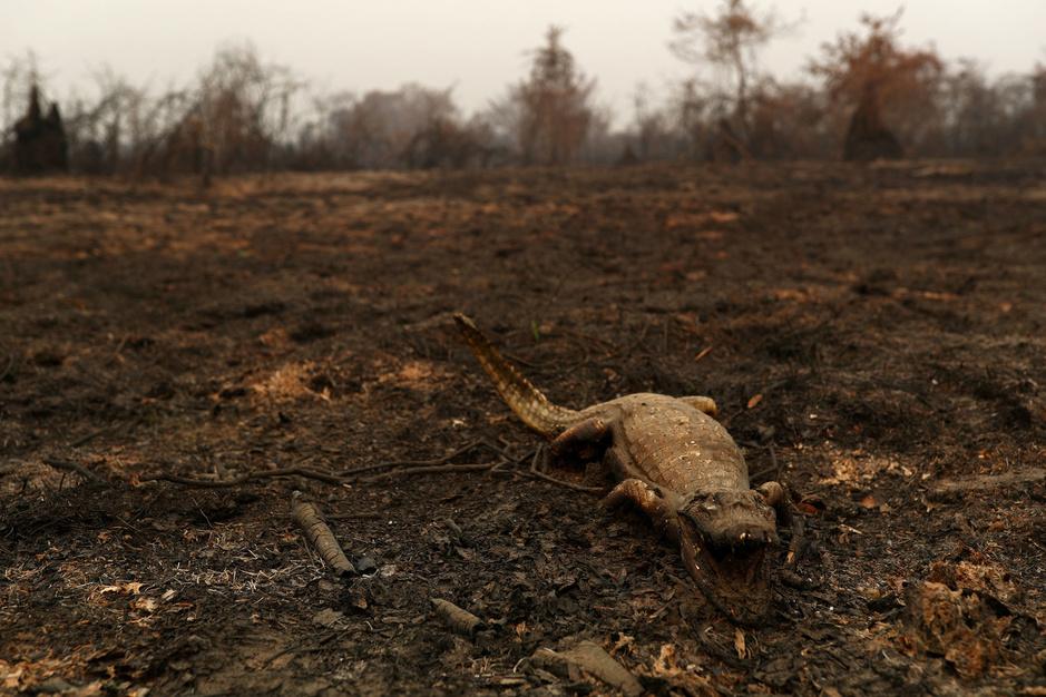 Ontbossing in Amazone zet ook 's werelds grootste moeraslandschap in brand