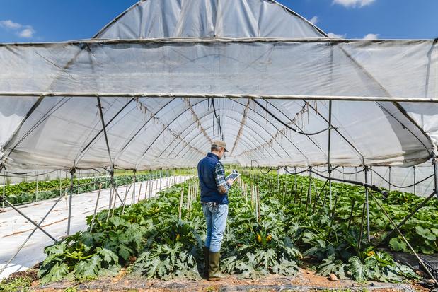 Boerenforum vraagt meer aandacht voor lokale handel
