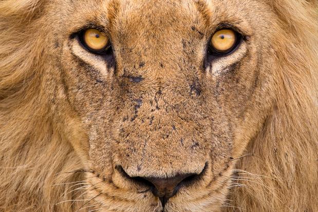 La chasse aux trophées est-elle vraiment dangereuse pour la survie des espèces animales ?