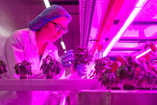 Bio-Planet start met kruiden uit eigen verticale boerderij
