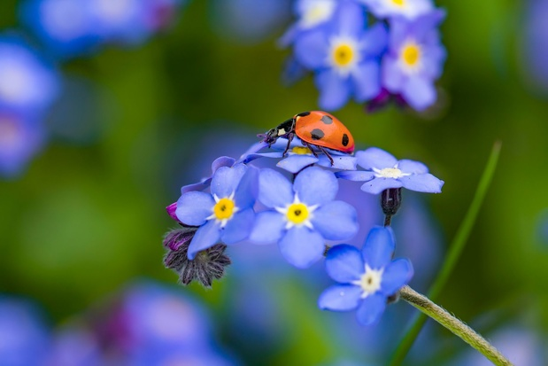 Accueillez les insectes nécessaires au bien-être de votre jardin