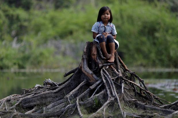 'Wat in het Amazonewoud gebeurt is niets minder dan ecocide en moet in het internationaal strafrecht'