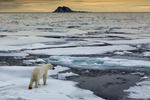 """""""La banquise dans l'Arctique fond à une vitesse dramatique"""""""