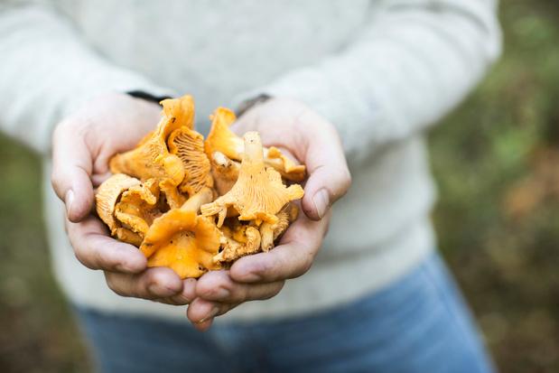 Des champignons pour réduire le risque de cancer de la prostate