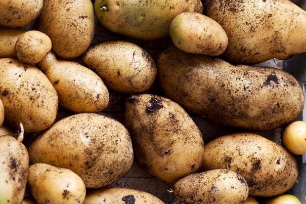 Elke week 25 ton aardappelen naar de voedselbanken