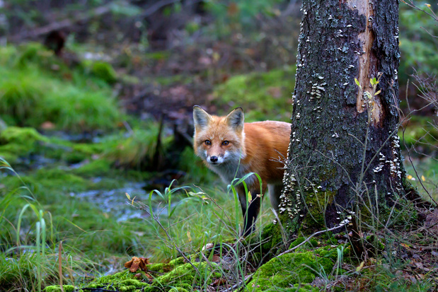 Mozilla patcht kwetsbaarheden in Firefox 77