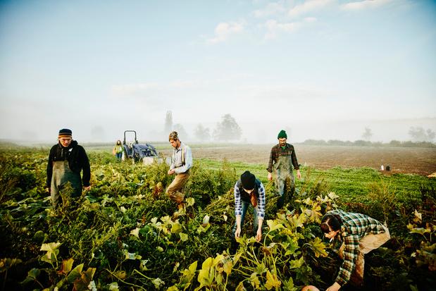 Festival voor boeren en bijen neemt eten in eigen handen