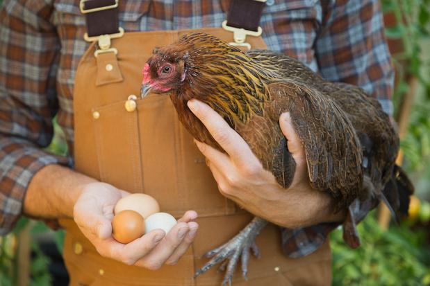 Une ONG récompense 50 marques pour le bien-être animal