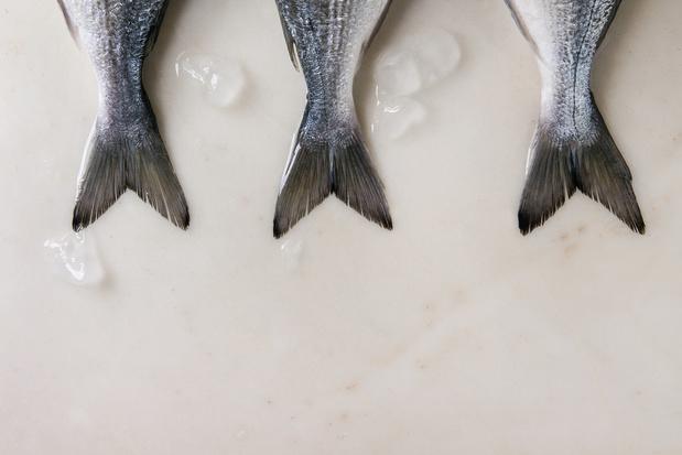 Duurzame vis vindt zijn weg naar Belgische winkels: bijna helft van aanbod is gecertificeerd
