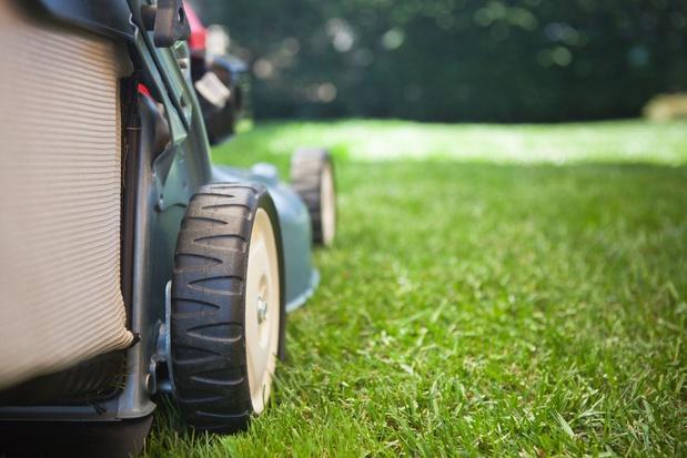 Wat met mijn lange gras na mei? 5 tips voor je Maai Mei Niet-gazon