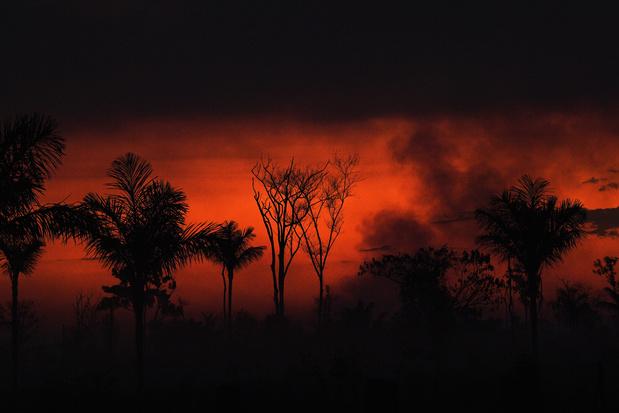 Amazonewoud blijft onverminderd branden ondanks afbrandverbod