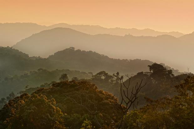 Hoe Rwanda 800.000 hectare bos herstelde in 10 jaar tijd