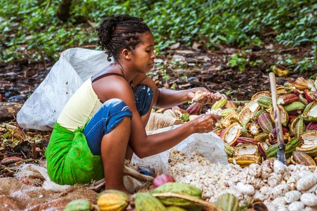 Europese chocolade, soja en palmolie blijven regenwouden verwoesten