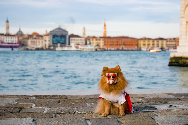 Venetië vraagt toeristen terug te komen