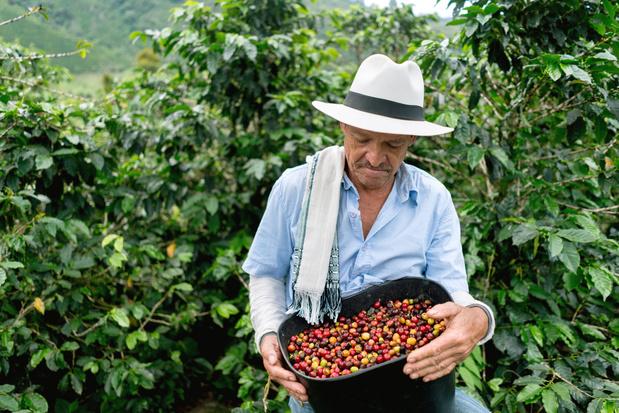 Koffiebedrijven houden duurzame beloftes niet