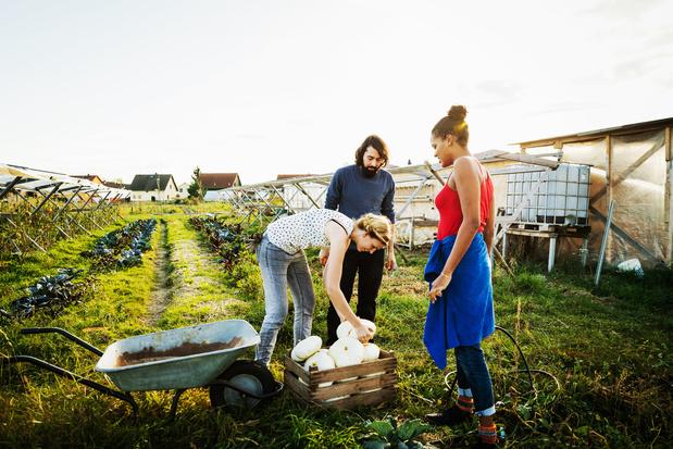 Samen groenten kweken kan goed zijn voor de gezondheid