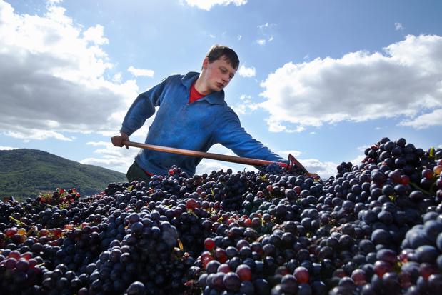 Comment les viticulteurs français s'adaptent au changement climatique