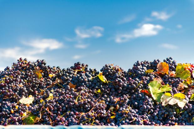 'Onder wijnbouwers vind je geen klimaatontkenners'