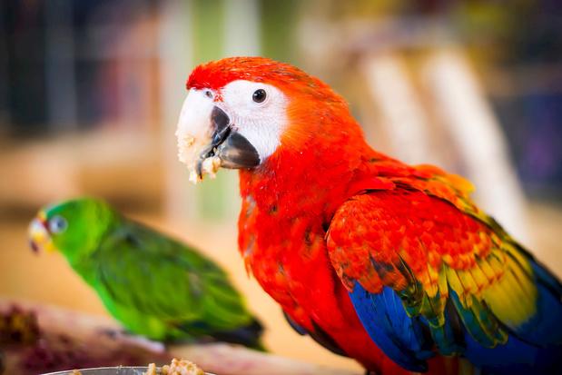 Papegaaienwerk