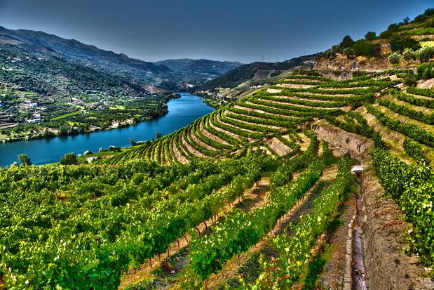 Op wijntrip: 9 Europese wijnhuizen bekroond om bezoekervaring