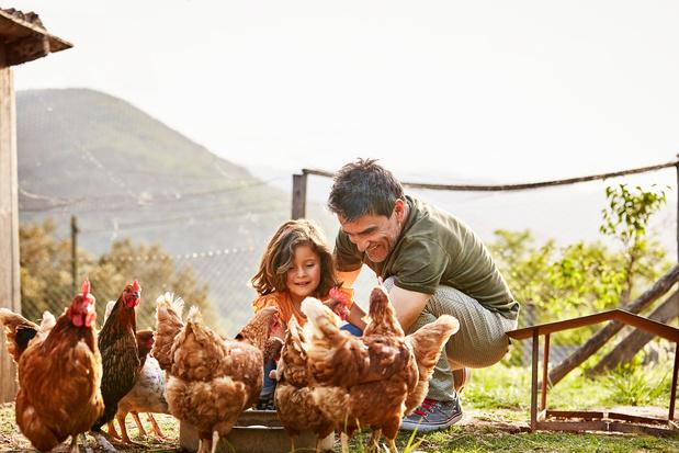 Les poules, nouvelle passion des confinés à la campagne