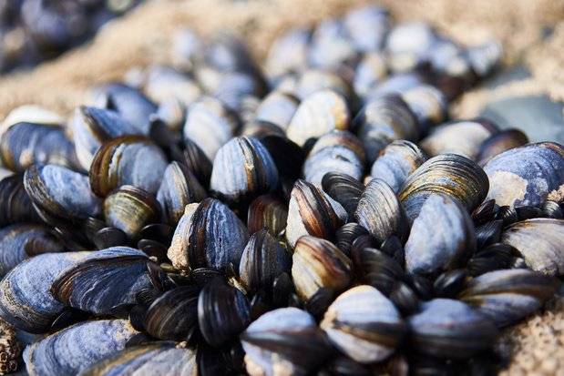 Wie zeevruchten eet krijgt meeste microplastics binnen