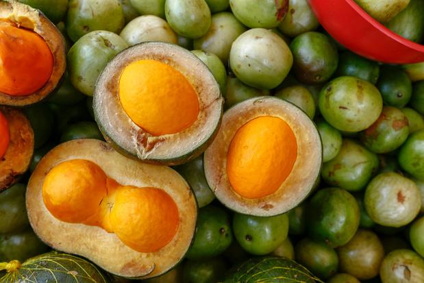 Braziliaanse vrouwen bestrijden droogte met de teelt van de umbu, een klein groen vruchtje