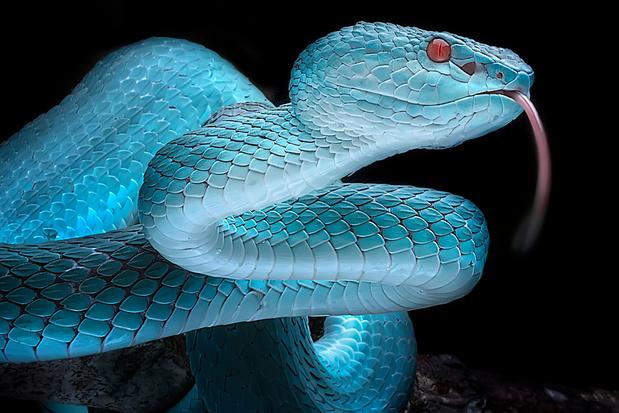 Des chercheurs développent une batterie flexible imitant la peau du serpent