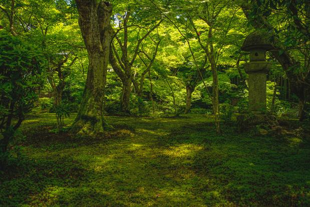 Heilige plekken zijn schatkamers voor de natuur