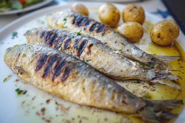 Eten we binnenkort sardienen of tonijn uit de Noordzee?