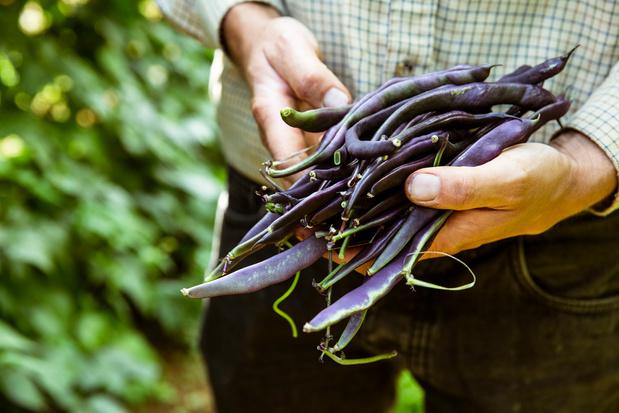 Eén op zeven Waalse landbouwers boert bio
