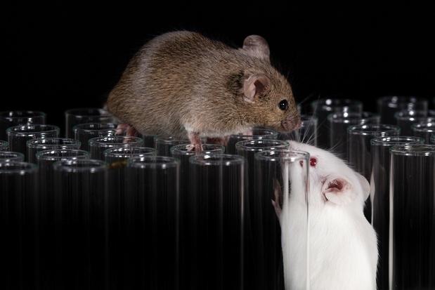 La souris a profité de l'homme pour conquérir le monde