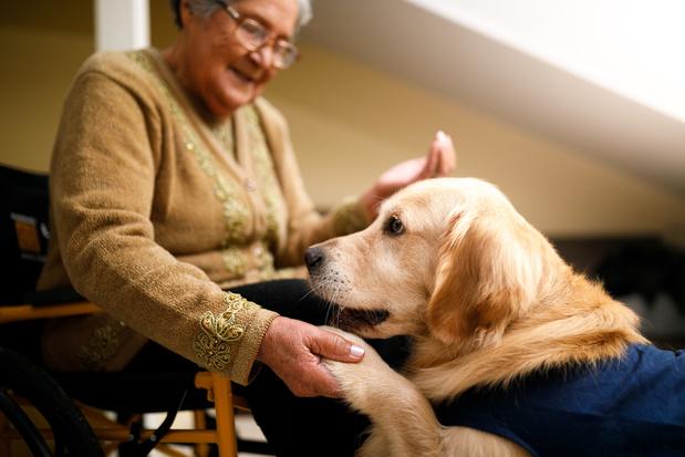 Un cadre légal plus clair pour l'accessibilité aux chiens d'assistance
