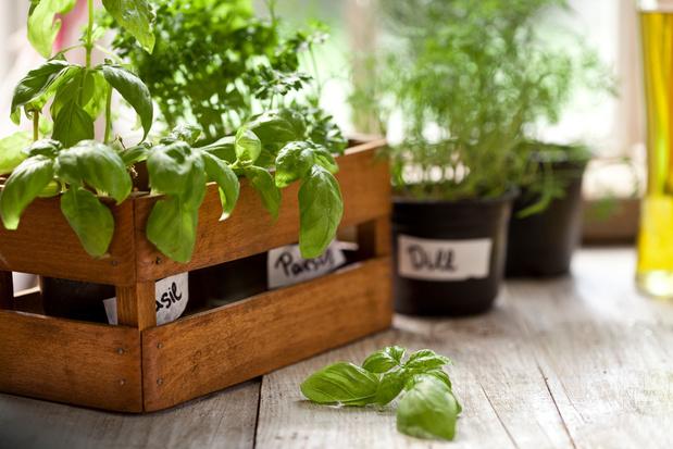 Cultiver des plantes aromatiques!