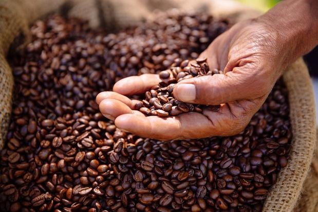 Bodemvorming bij koffie