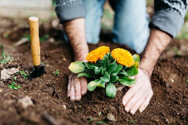 Jardiner en confinement : liste des horticulteurs et pépiniéristes qui livrent à domicile