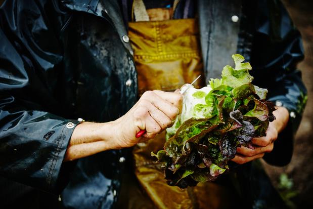 Groenten- en fruittelers vragen open grenzen voor seizoensarbeiders